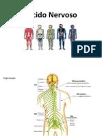126143247-Tecido-Nervoso.pdf