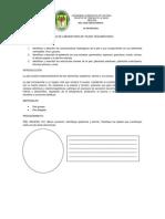 GUIA DE LABORATORIO DE TEJIDO TEGUMENTARIO.docx