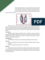 Anatomi PARATIROID