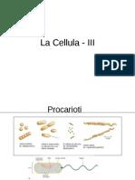 Bc3a - La Cellula III