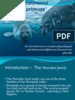 Comparisions between two phocids Weddell seals versus Monk seals.pptx
