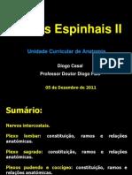 Aula No 38 - Slides - Nervos Espinhais II - Aula 38
