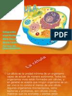 Celula (Anatomofisiologia)