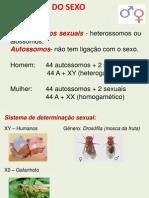 HERANÇA DO SEXO - 2003