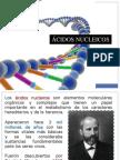 1. Ácidos Nucleicos