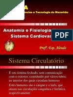 Anatomia - 12º Aula