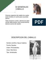 Generalidades Del Caballo.