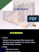 EFLORESENSI 2