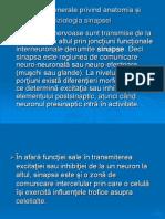 Sinapsa anatomie