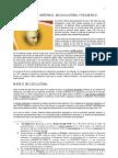 Apuntes Contexto Kant (Alumnos)