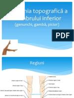 Anatomia topografică a membrului inferior.pptx
