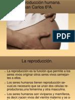 La reproducción humana.Juan Carlos 6ºA.(1)