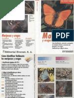 Animales - Mariposas y Orugas