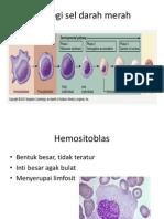 Sitologi Sel Darah Merah