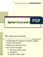 6 - Spinal Cord + Nerves Grays