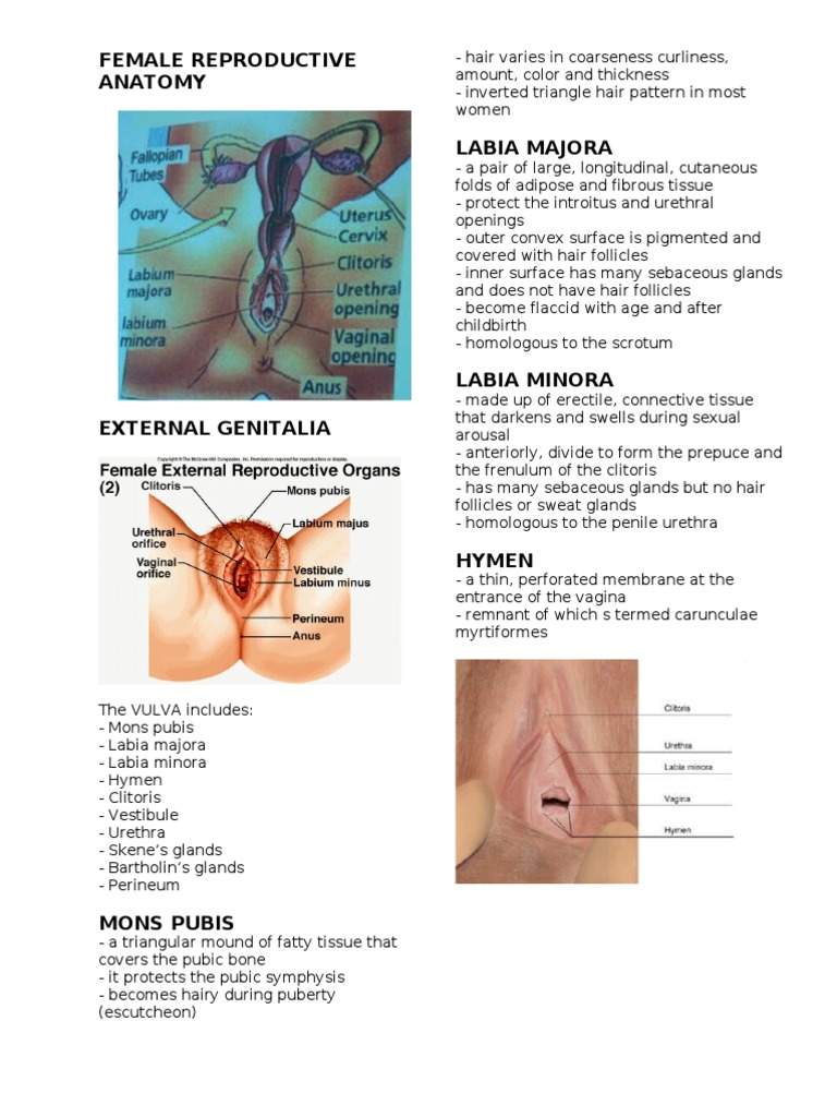 Contemporary Anatomy Of Hymen Membrane Gallery Physiology Of Human