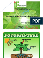 Absorcao de Nutrientes e Fotossintese