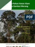 Buku Pohon-Pohon Hutan Alam Rawa Gambut Merang