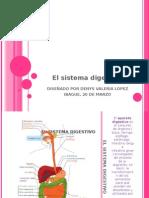 El Sistema Digestivo Usos