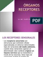 organos_receptores