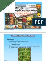 cultivo-calabacin-invernadero
