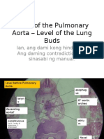 Level of the Pulmonary Aorta – Level of.carla