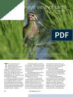 RT Vol 12, No. 2 A human-eye view of birds