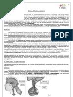 Guía Endocrino  - 3º JS 2013