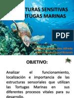 Estructuras Sensitivas en Tortugas Marinas
