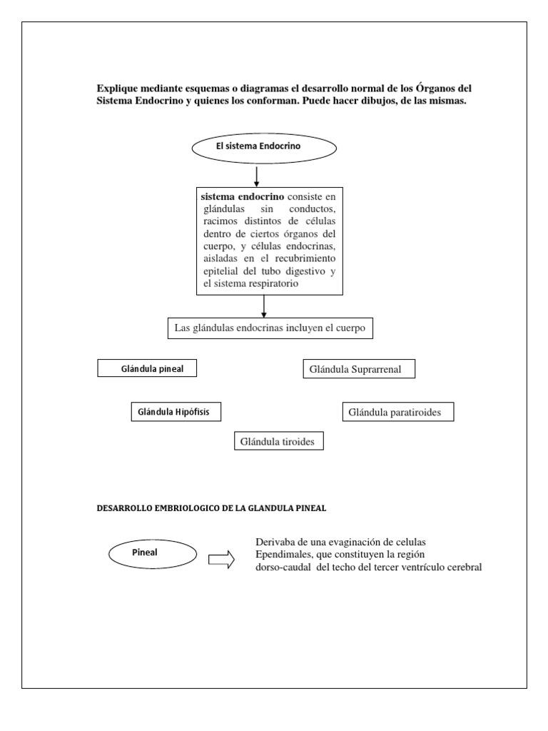 diagrama histoembriologia.docx