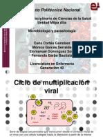 Multiplicación de los Virusi