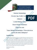 Informe de Diseccion de Cecibel-Marcel