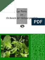 Las Flores en Proust (1)