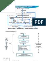 Patofisiologi Meningitis Tb
