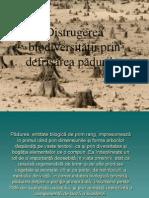 Distrugerea Biodiversitatii Prin Defrisare