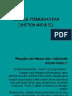 Junction Sel 2009