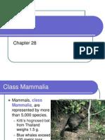 28. Mammals (1)