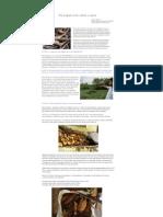 YOGURT CERDOS FUNICA.pdf