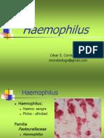 64583084 Haemophilus Brucella Listeria Usmp 2011