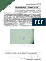 Trypanosoma Cruzi en El Liquido Cefalorraquideo de Un Paciente Con SIDA
