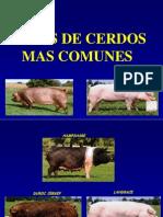 Razas de Cerdos 1[1]