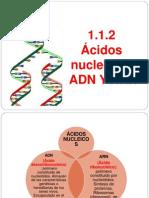 2.- ÁCIDOS NUCLEICOS. ADN. CORREGIDO (1)
