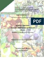 Examen Final Anatomia y Morfologia de Frutales