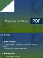 Dorso Y Diafragma