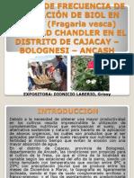7.2. Efecto de BIOL en el cultivo de fresa.pptx