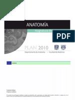 I Anatomiaunam