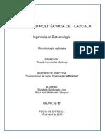 Reporte de Conservación de cepas fúngicas por liofilización