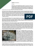 eucalyptus article kp nl