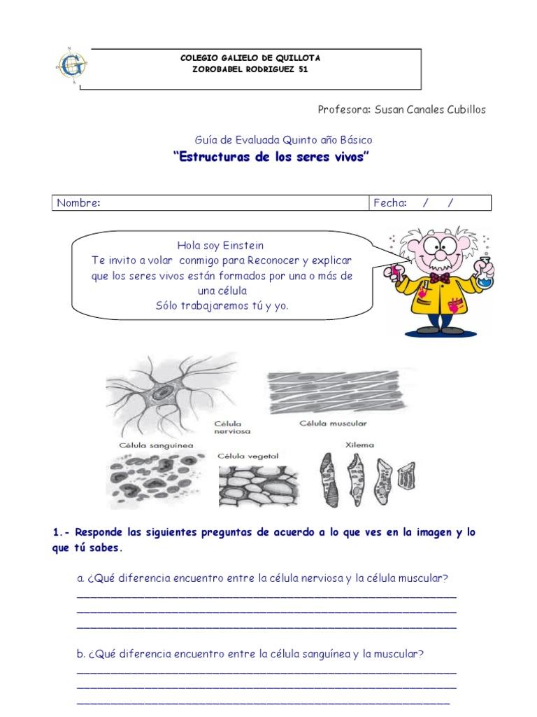 Guia de celulas 5 basico - Estructuras libros vivos ...