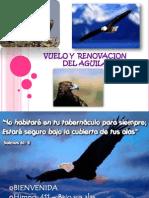 Aprendiendo Del Vuelo y La Renovacion de Las Aguilas